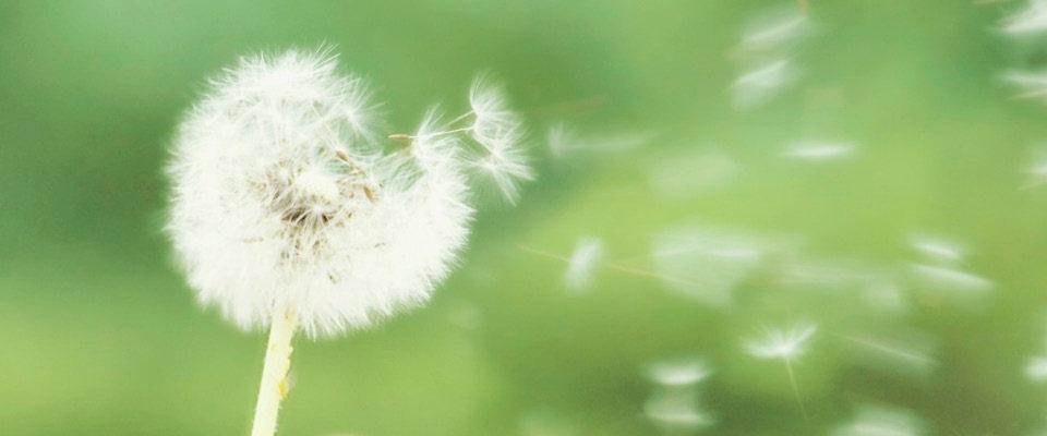 Il servizio di test delle allergie della Farmacia Elifani di Meta (Na)