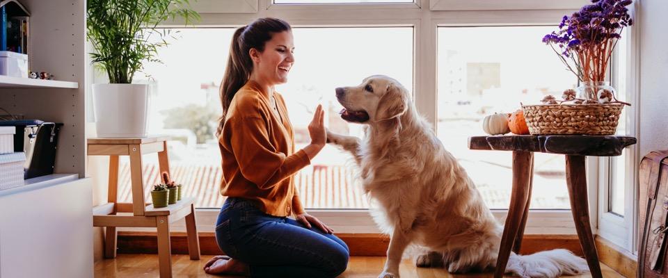 Animali domestici, approvato l'uso di farmaci umani per cure veterinarie